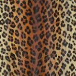 Papier peint peau de léopard d'AS Création : référence 6630-16