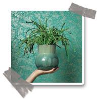 le vert : plantes et papiers peints
